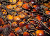 De close-up palm oliehoudende vruchten — Stockfoto