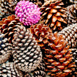 The Pine cone — Stock Photo