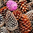 Stock Photo: The Pine cone