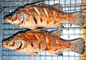 The Fried seabass fish — Stock Photo