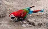The Beautiful macaw — Stock Photo