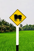 The Guide post of ox cart isolated on orange background — Stock Photo
