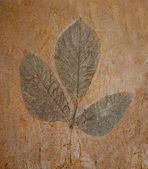 The Imprint leaf on cement floor background — Stock Photo