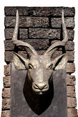 The Sculpture of head bull on wall — Stock Photo