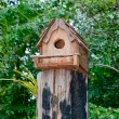 The Wooden house of bird on log wood — Stock Photo