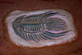 The Model fossil of fish — Stock Photo