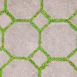 Royalty-Free Stock Photo: The Cement brick between green grass background