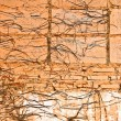 Stock Photo: Abstract brick wall and tree roots background