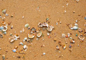 The Sea shell with sand as background — Stock Photo