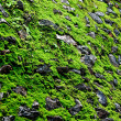 Stock Photo: Green moss background texture