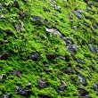 The Green moss background texture — Stockfoto