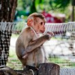 The Young monkey — Stock Photo