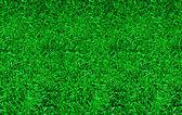 La textura de fondo verde hierba — Foto de Stock