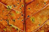 Kurutulmuş yaprak arka plan dokusu — Stok fotoğraf