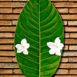 The Green leaf with white flower on brick wall background — Stock Photo