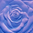 The Sculpture sandstone of rose — Stock Photo