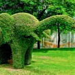 The Bending tree of elephant - Stock Photo