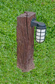 The Bulb on stump with green grass background — Stock Photo