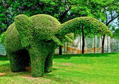The Bending tree of elephant — Stock Photo