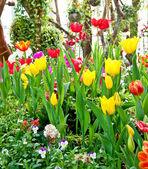 The Garden of flower — Stock Photo