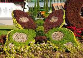 CHIANGMAI THAILAND - January 23 : The Plant show in Internation — Stock Photo
