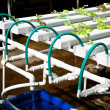 Stock Photo: Organic hydroponic vegetable garden