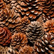 The Pine cone — Stock Photo #9643055