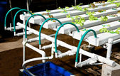 The Organic hydroponic vegetable garden — Stock Photo