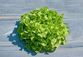 The Young green vegetable on green house — Stock Photo