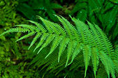 The Green fern leaf — Stock Photo