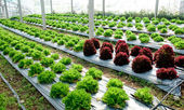 The Green and red oak on green house — Stock Photo