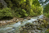 Mountain river. Abkhazia. — Stock Photo