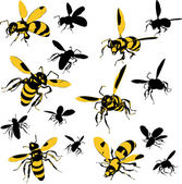 A set of wasp illustrations — Stock Vector
