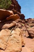Lizard Sleeps in the Desert Sun — Stock Photo