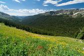 Mountain Wildflower Landscape — Stock Photo