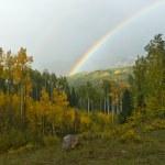 regnbåge över hösten aspen skogslandskap — Stockfoto #10504342