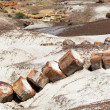 Broken Tree in Petrified Forest National Park — Stock Photo