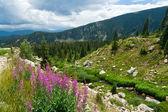 Colorado Mountain Landscape — Stock Photo