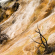 Stock Photo: Mammoth Hot Springs Closeup Yellowstone National Park