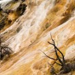 Mammoth Hot Springs Closeup Yellowstone National Park — Stock Photo
