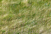 Green Grass Natural Texture Background Pattern 2 — Stock Photo
