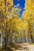Onverharde weg door colorado aspen bos in de herfst — Stockfoto
