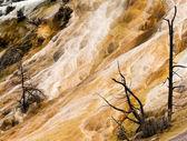 Mammoth hot springs closeup parc national d'yellowstone — Photo