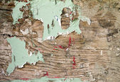 Grunge Covered Wood With Peeling Paint Texture — Stock Photo