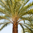 Stock Photo: Single palm tree.