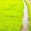 In rice cultivation. - 