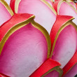 Lotus petal designs. — Stock Photo