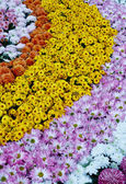 Rows of colorful flowers — Stock Photo