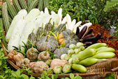 Group of tropical vegetables — Stock Photo