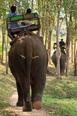 Elephant riding for tourists in nort of Thailand — Stock Photo
